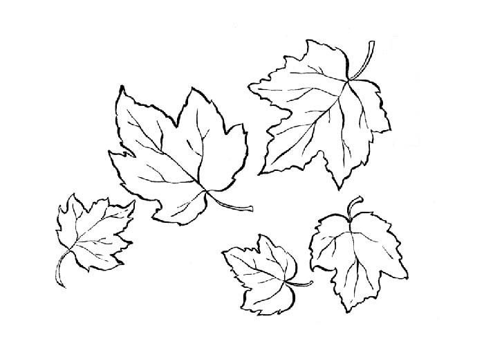 Frunze Planse De Colorat