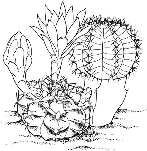Cactusi Planse De Colorat