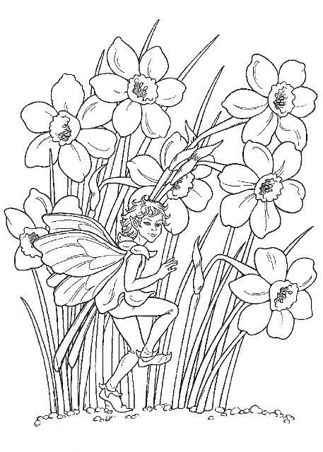 Narcise Planse De Colorat
