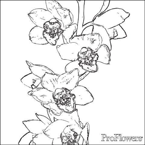 Orhidee Planse De Colorat