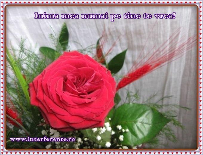 http://www.interferente.ro/images/stories//sarbatori/felicitari-cu-trandafiri-valentines-day/IMG_4197.JPG