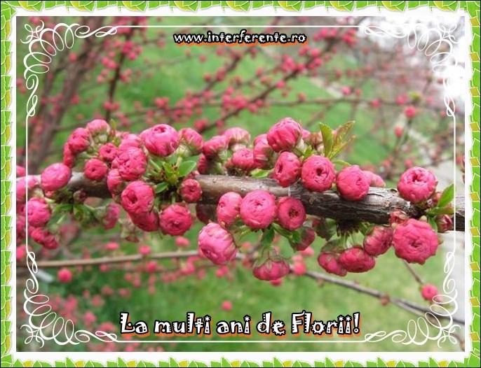 http://www.interferente.ro/images/stories//sarbatori/florii_2014_felicitari/felicitare%20virtuala%20de%20florii.JPG