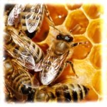 Ghicitori despre albina