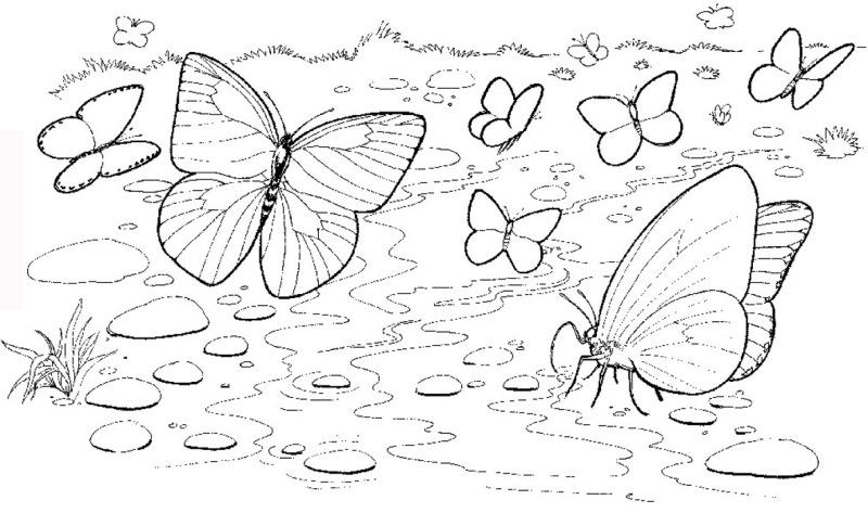 Fluturii Simbolizeaz   Pentru Oricare Dintre Noi Copii Sau Adul  I