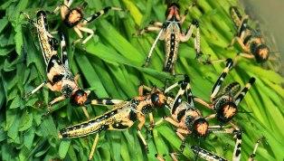 Insecte daunatoare