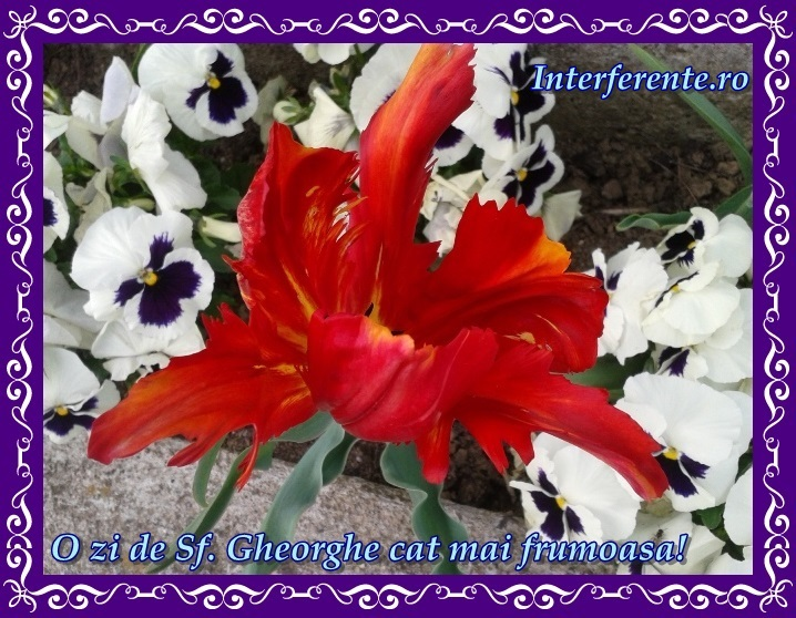 http://www.interferente.ro/images/stories/felicitari/sf-gheorghe-felicitari-la-multi-ani/felicitari-sf-gheorghe.jpg