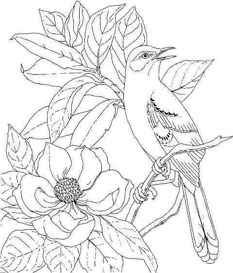 Mai multe planse de colorat cu flori de primavara gasiti pe http://www ...