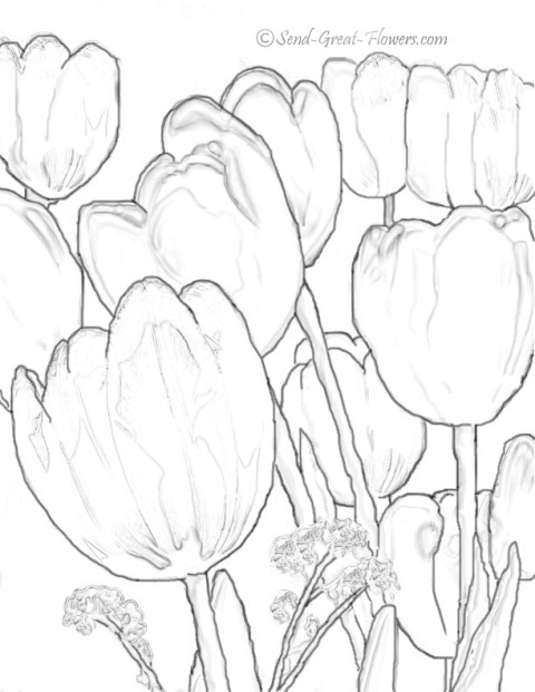Click to enlarge lalele planse desenat.jpg