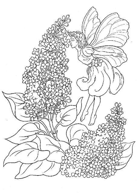 Liliac Planse De Colorat