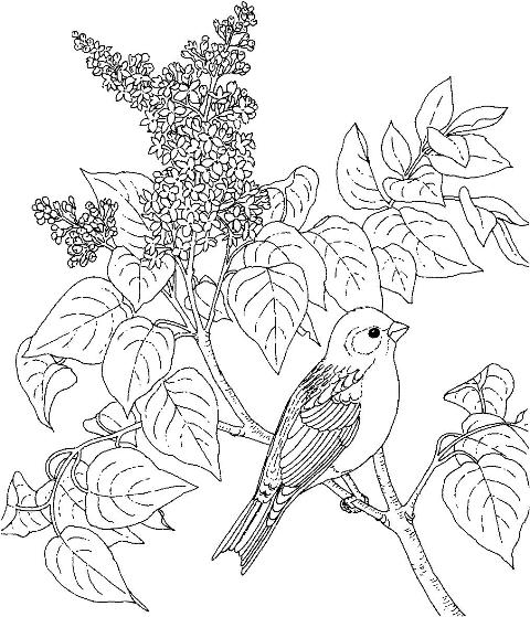 difficult bird coloring pages - photo #18