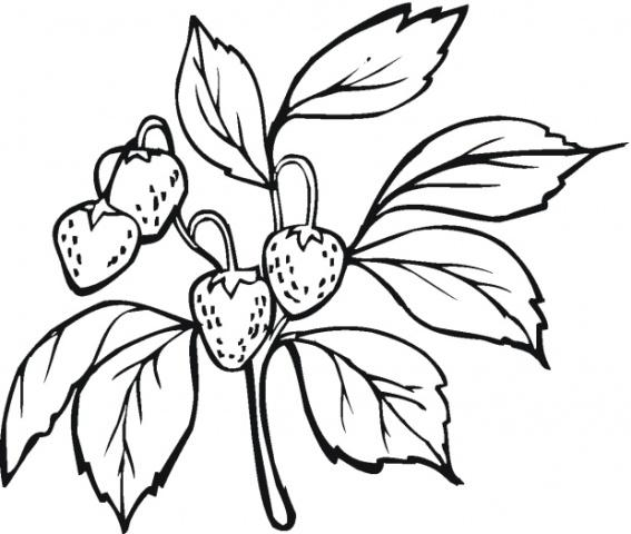 fructe care contin fier