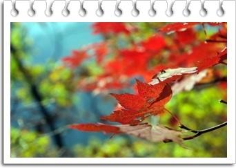 Povestea frunzelor in versuri