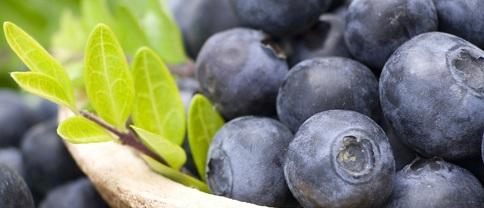 Plante folosite in medicina traditionala afinul