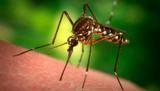 Cum scap de furnici molii purici gandaci de bucatarie si alte insecte