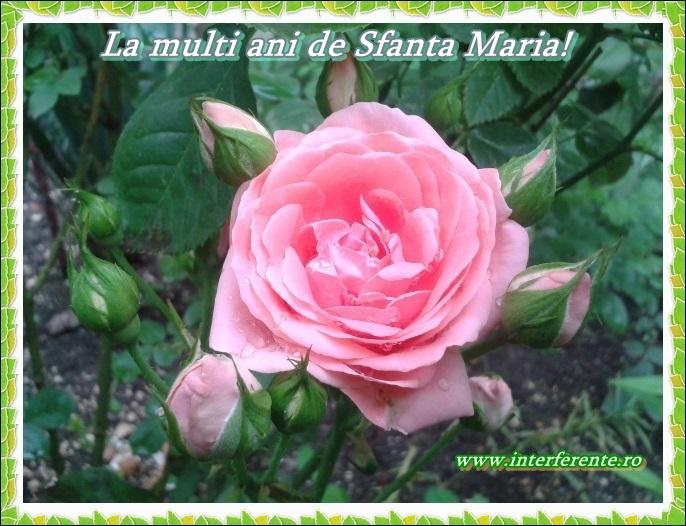 http://www.interferente.ro/images/stories/sarbatori/La-multi-ani-de-Sfanta-Maria-felicitari/La%20multi%20ani%20de%20Sfanta%20Maria%20felicitare.jpg