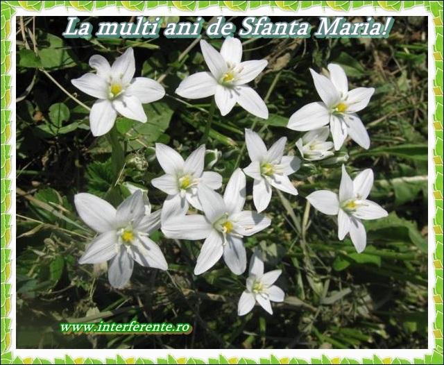 http://www.interferente.ro/images/stories/sarbatori/La-multi-ani-de-Sfanta-Maria-felicitari/felicitari%20sf%20marie.jpg