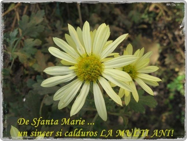 http://www.interferente.ro/images/stories/sarbatori/sfanta-maria-felicitari-la-multi-ani/sfanta%20maria%20felicitare.jpg